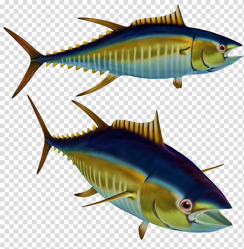 Tuna, two yellow fin tunas transparent background PNG.