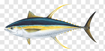 Tuna cutout PNG & clipart images.