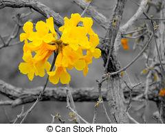 Yellow ipê clipart #16