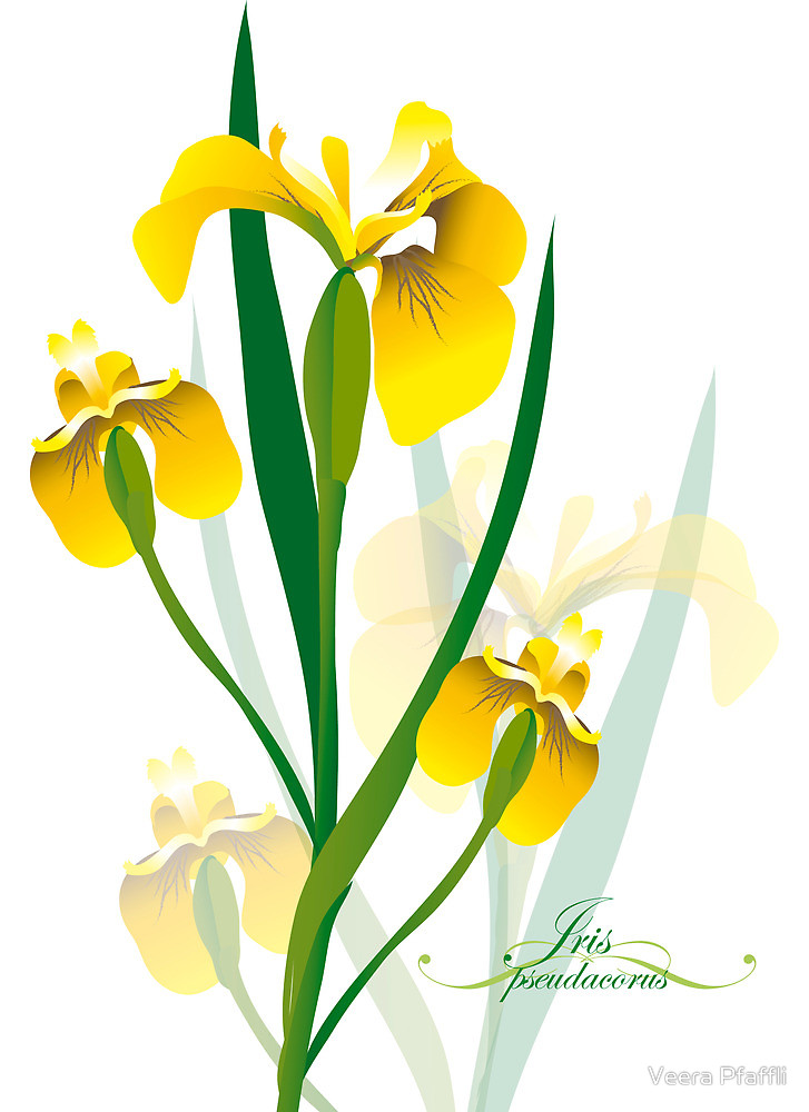 yellow iris flower design