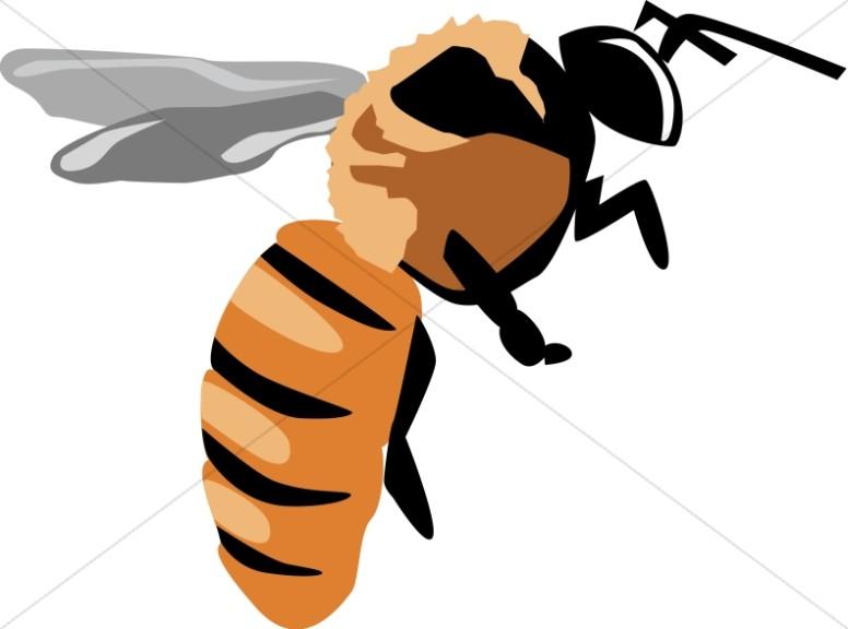 Yellow Jacket Bee.