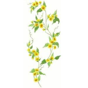 Confederate yellow Jasmine Vine drawings.