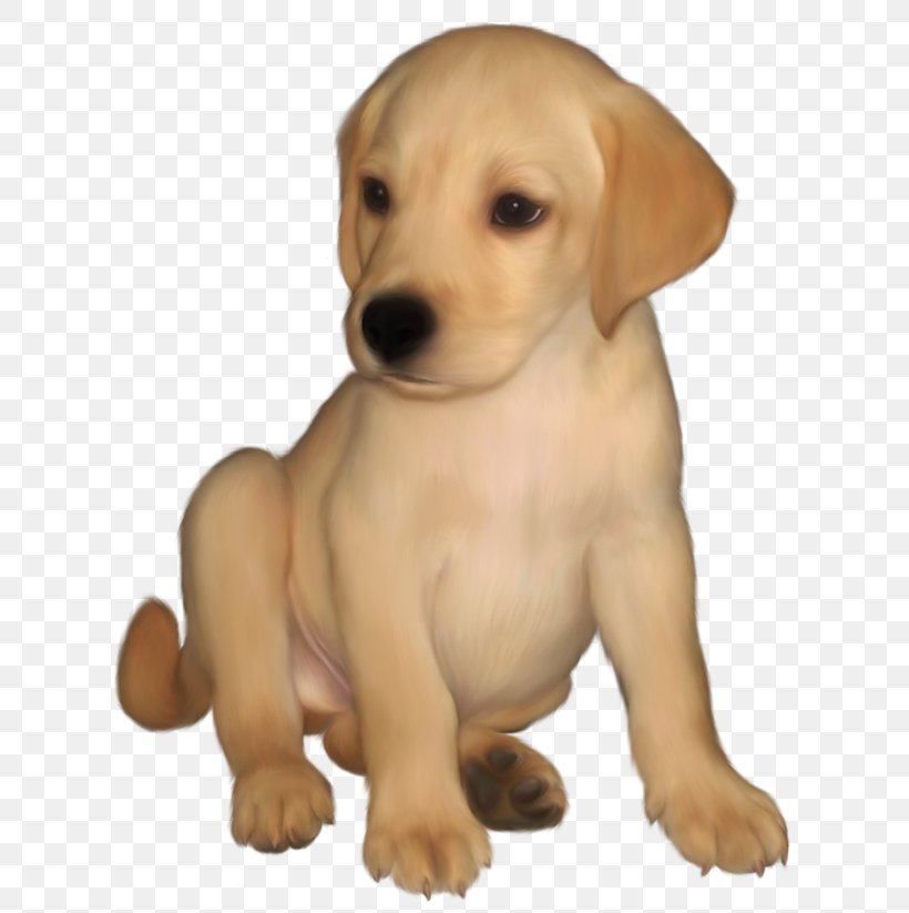 Labrador Retriever Golden Retriever Puppy Clip Art, PNG.