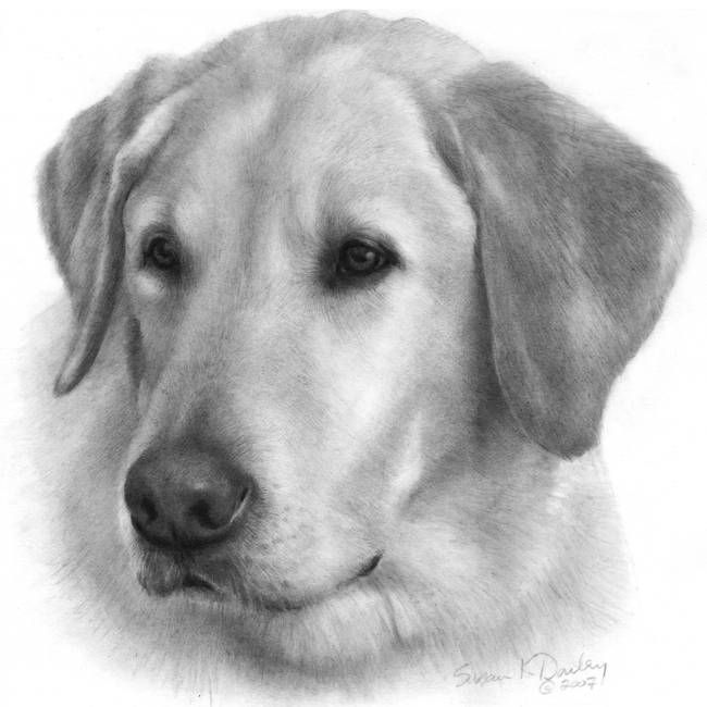 Yellow Lab Dog Clipart.