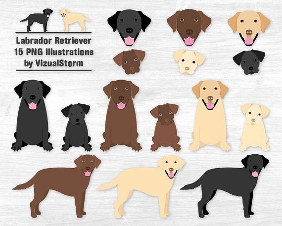 Labrador Retriever Clipart Black Lab Chocolate Lab Yellow.