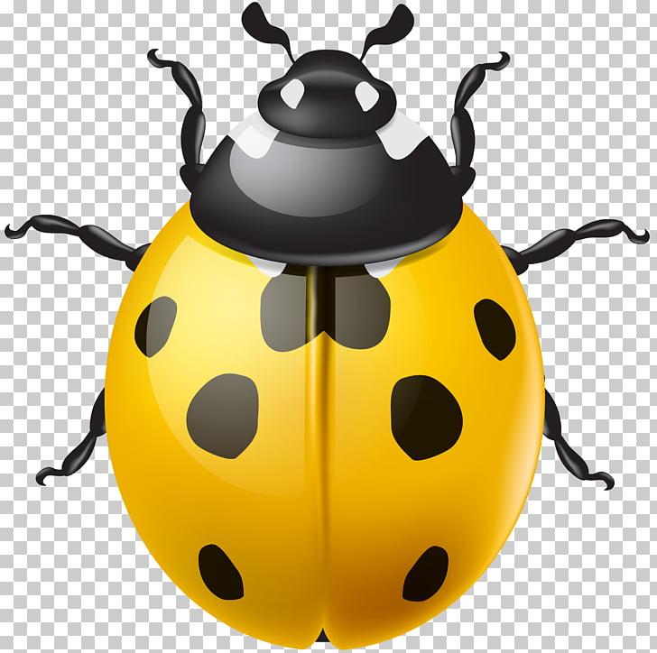 Ladybird Beetle , Yellow Ladybird PNG clipart.