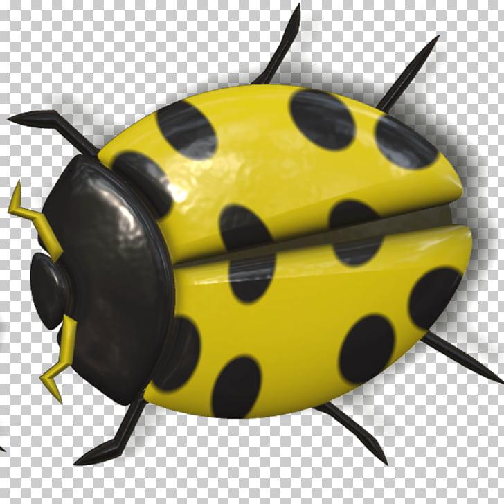 Ladybug Yellow and Black, black and yellow ladybug beetle.