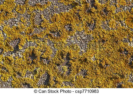 Stock Photos of Yellow lichens on a stone wall.