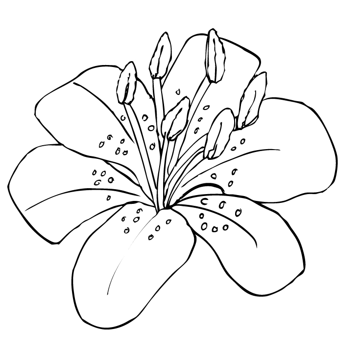Tiger Lily Cartoon Clipart.