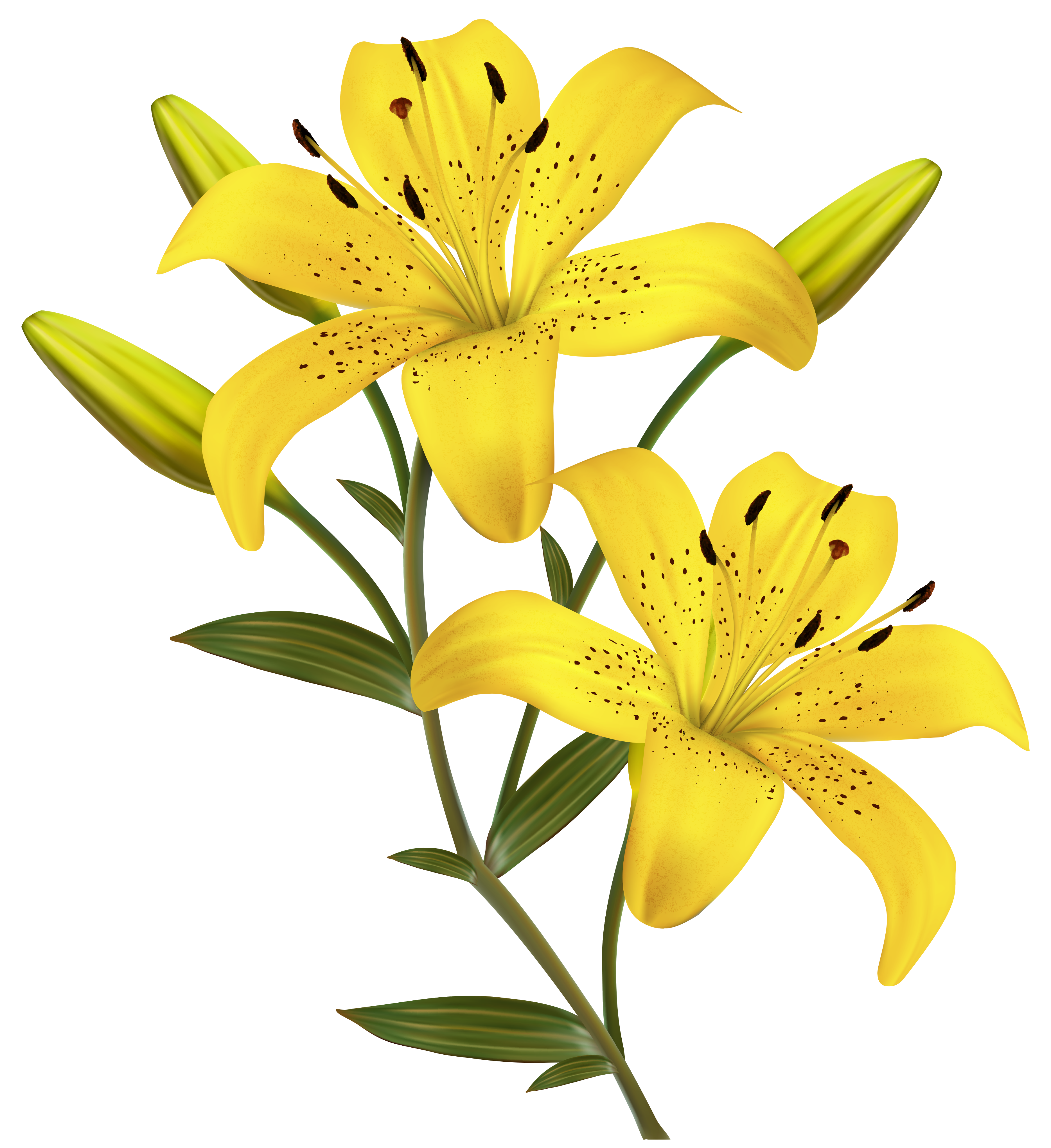 Yellow Lily Clip Art.