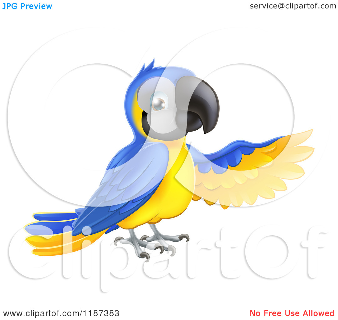 Cartoon of a Presenting Blue and Yellow Macaw Parrot.