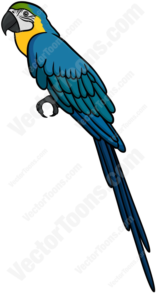 Blue And Yellow Macaw Cartoon Clipart.