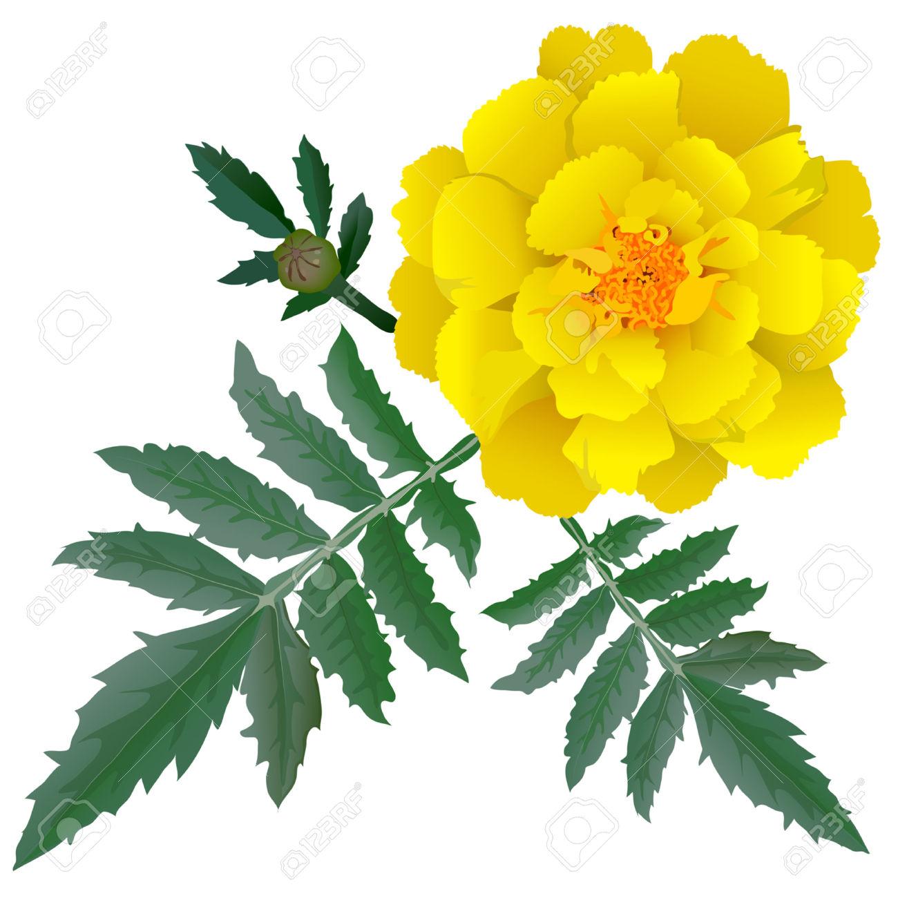 Yellow Marigolds Clip Art.