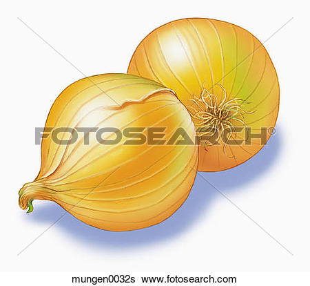 Stock Illustration of Two Yellow Onions mungen0032s.