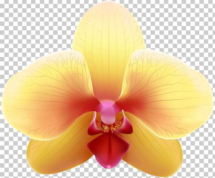 Yellow Orchids PNG, Clipart, Art, Blue, Clip Art, Clipart.