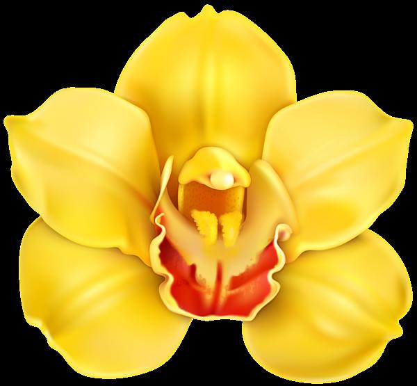 Orchid clipart clip art, Orchid clip art Transparent FREE.