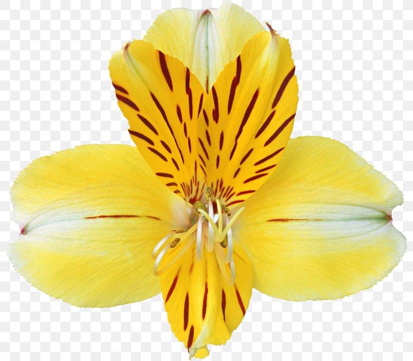 Yellow Orchid Massage Dallas Petal Pusher Orchids Clip Art.
