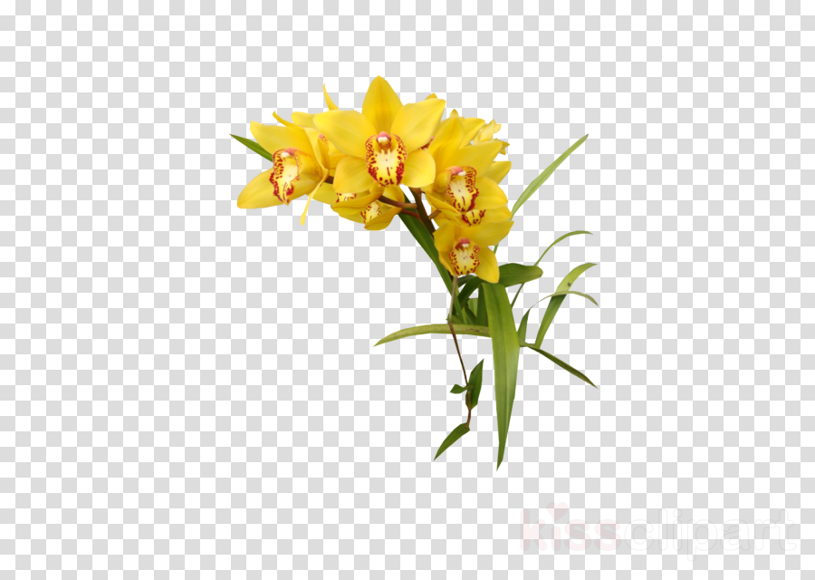 flower plant yellow cut flowers orchid clipart.