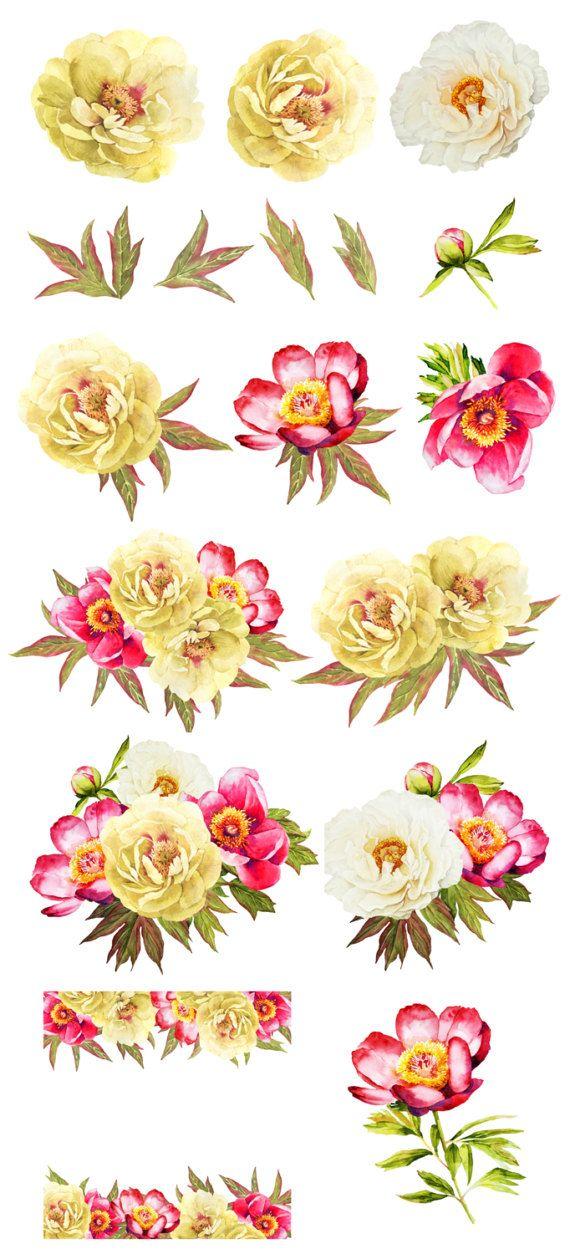 Peonies drawing, peonies bouquet watercolor, clip art.