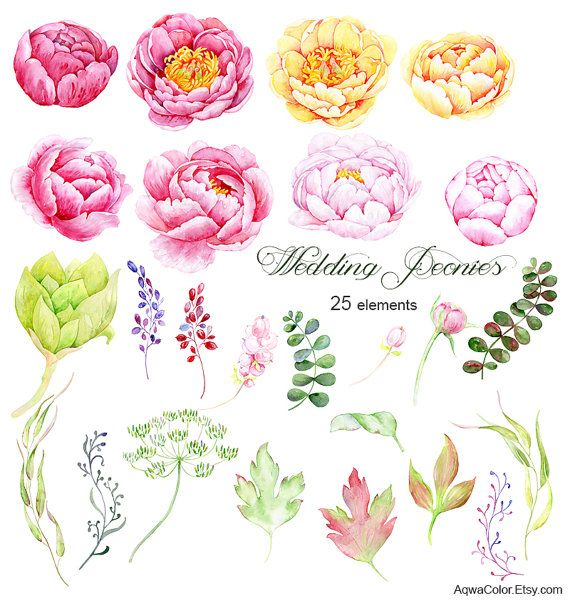 Watercolor peonies clipart Wedding Peonies.