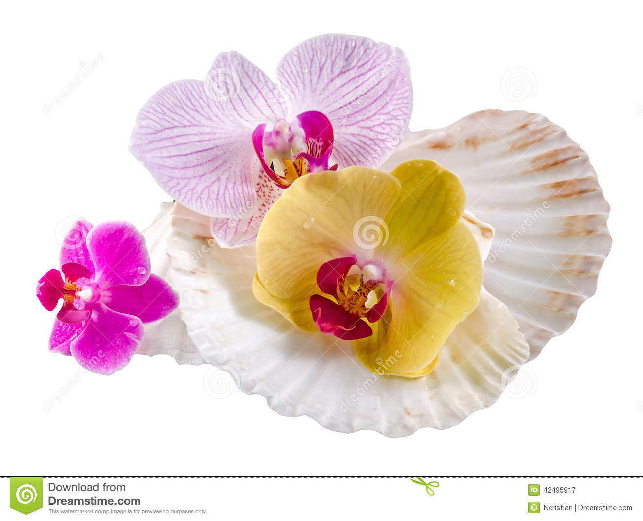 Colored, Mauve, Purple, Yellow, Pink, Orchid Flowers And Sea.