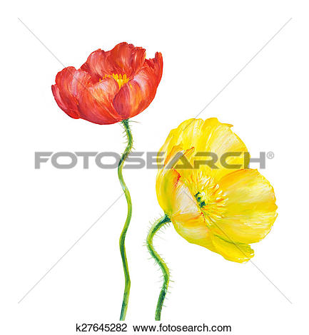 Clip Art of Yellow Poppy isolated on white k27645282.