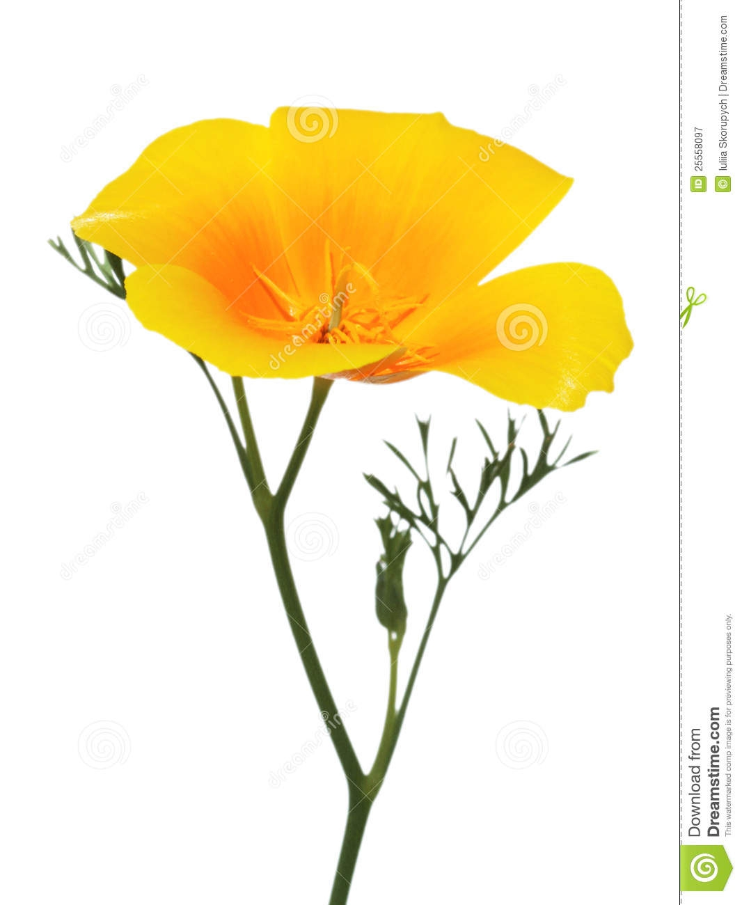 California Poppy Clipart#1937574.