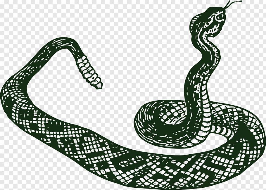 Snake, Snakes, Drawing, Vipers, Rattlesnake, Rat Snake.
