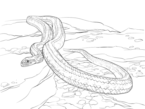 Yellow Rat Snake coloring page.