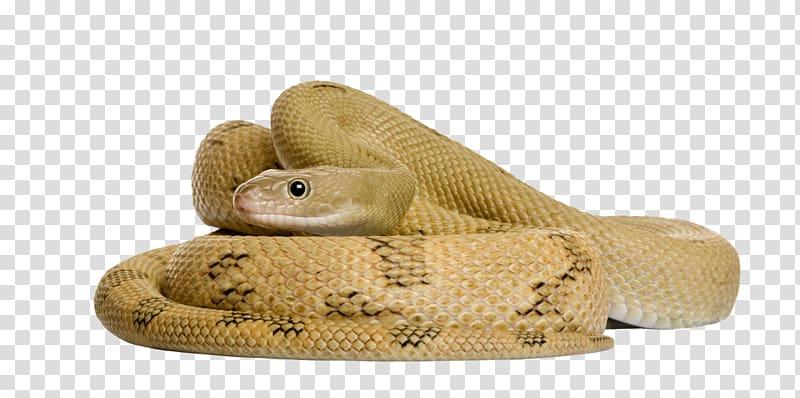Brown snake, Corn snake Rat snake, Entrenched snake.