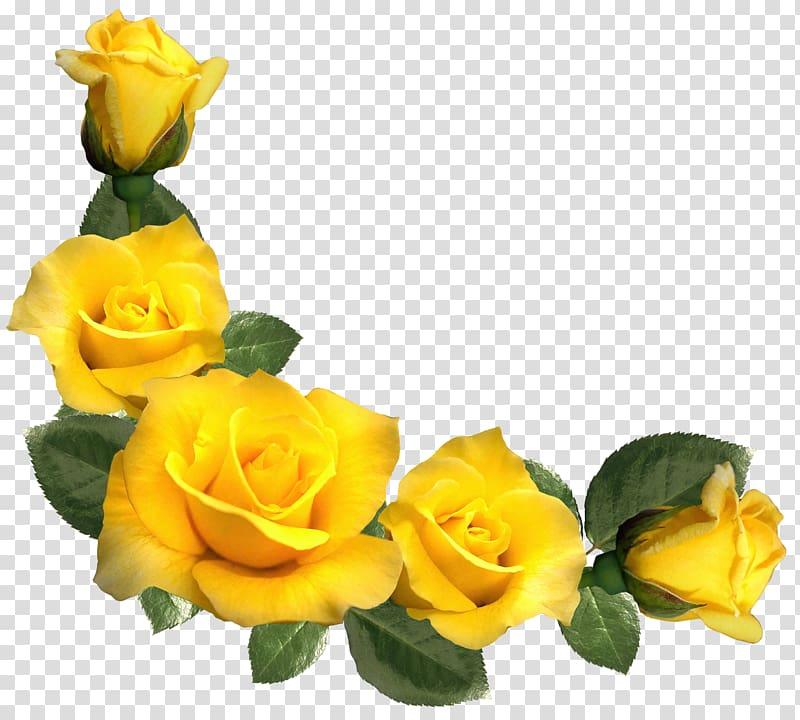 Rose Yellow , Beautiful Yellow Roses Decor , yellow petaled.
