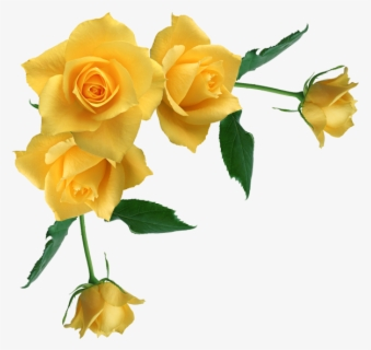 Free Yellow Rose Clip Art with No Background.
