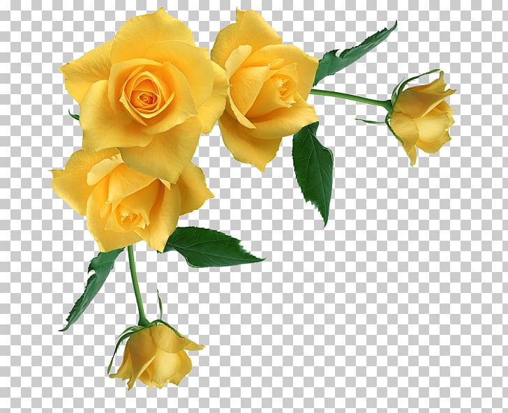 Borders and Frames Rose Yellow , Rose Corner s, yellow rose.