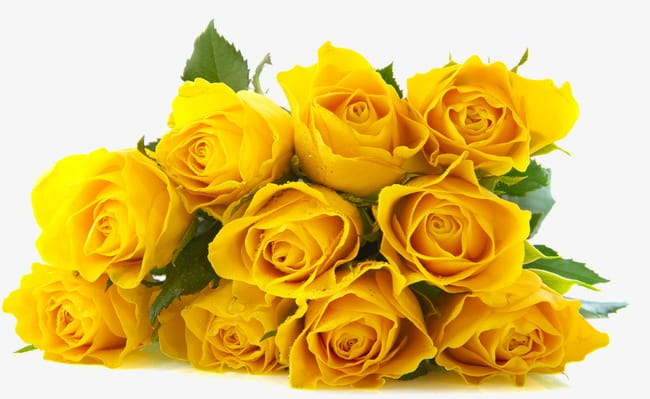 A bouquet of yellow roses PNG clipart.