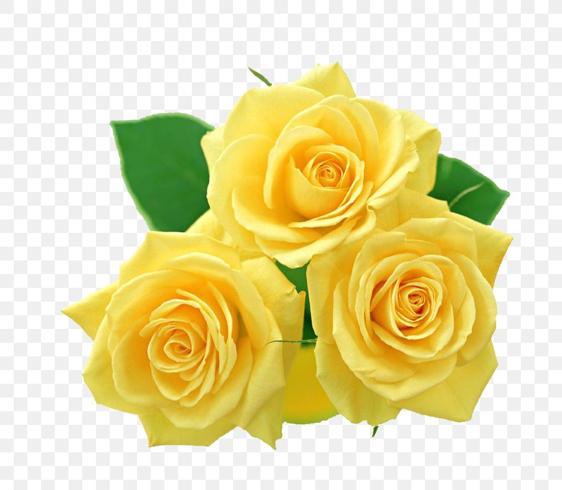 Rose Yellow Clip Art, PNG, 736x715px, Rose, Cut Flowers.