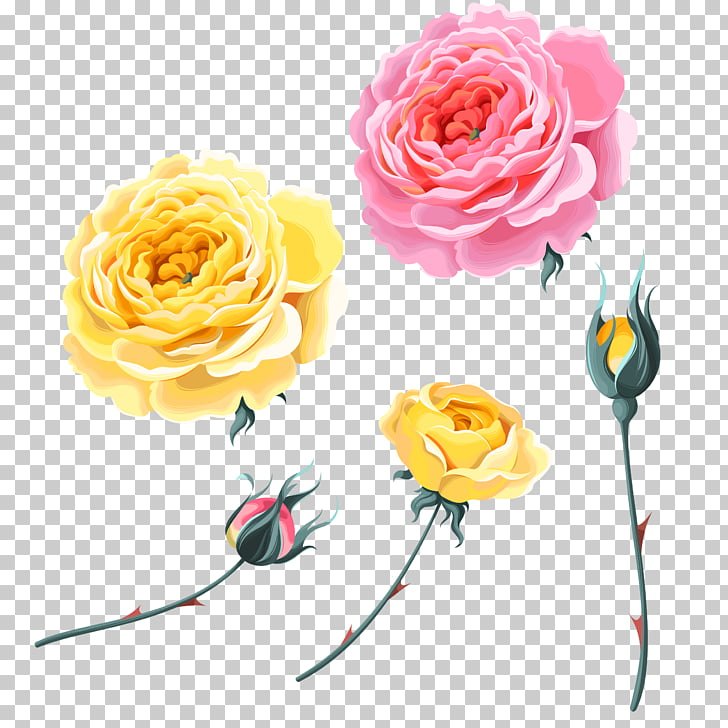 Garden roses Beach rose Yellow, rose,Pink Roses,Yellow Rose.