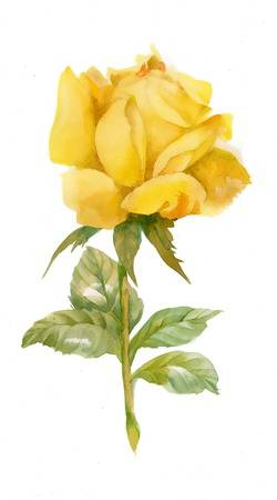 19,825 Yellow Rose Stock Vector Illustration And Royalty.