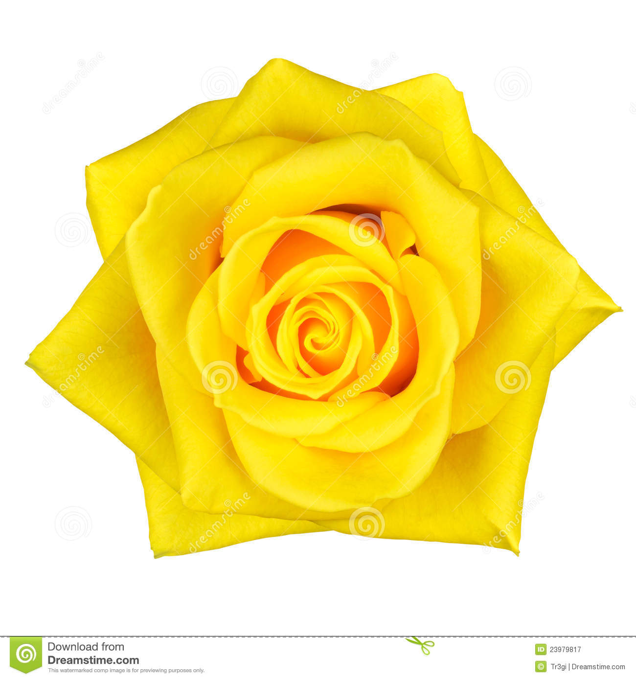 Texas Yellow Rose Clipart.