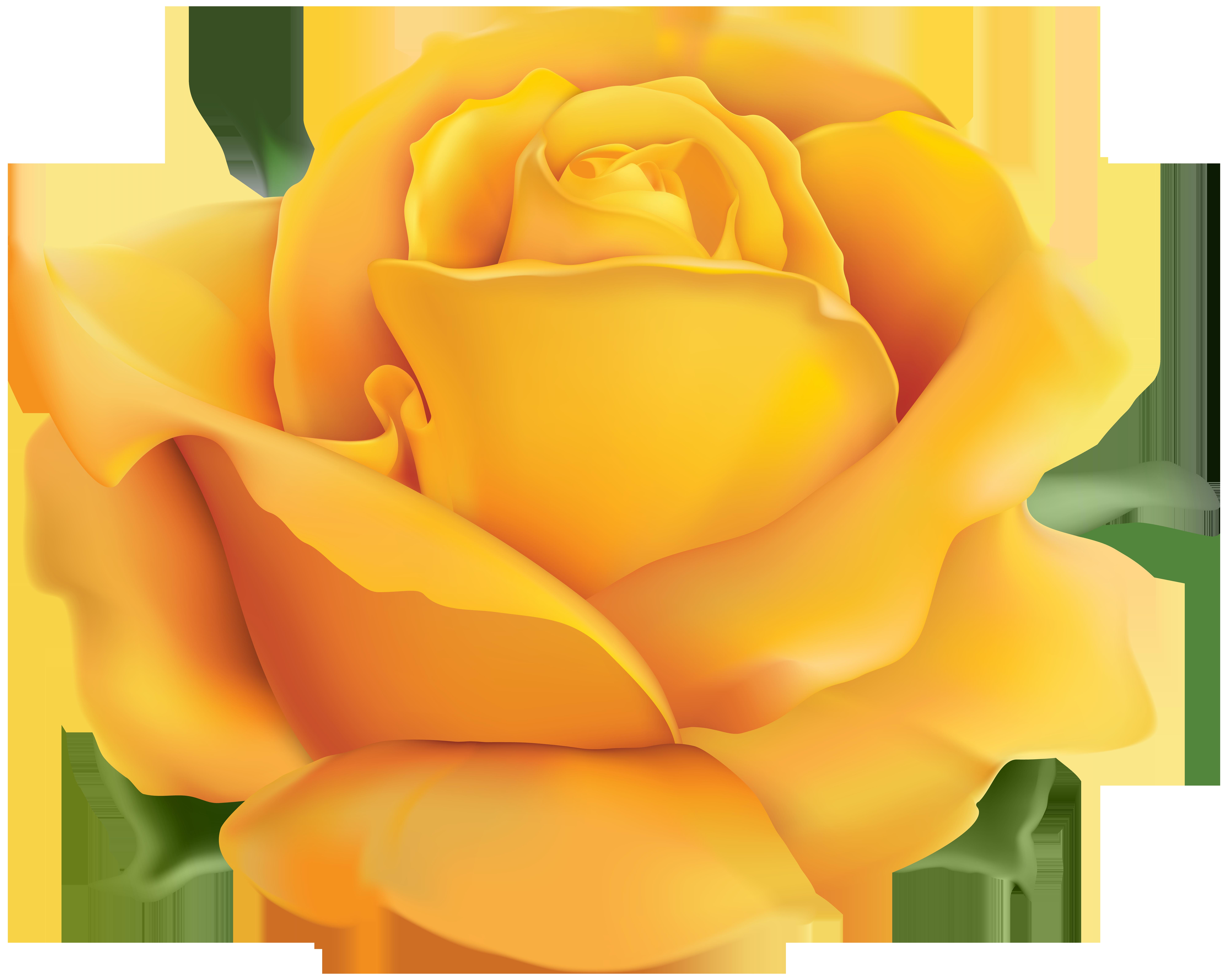 Yellow Rose PNG Clip Art Transparent Image.