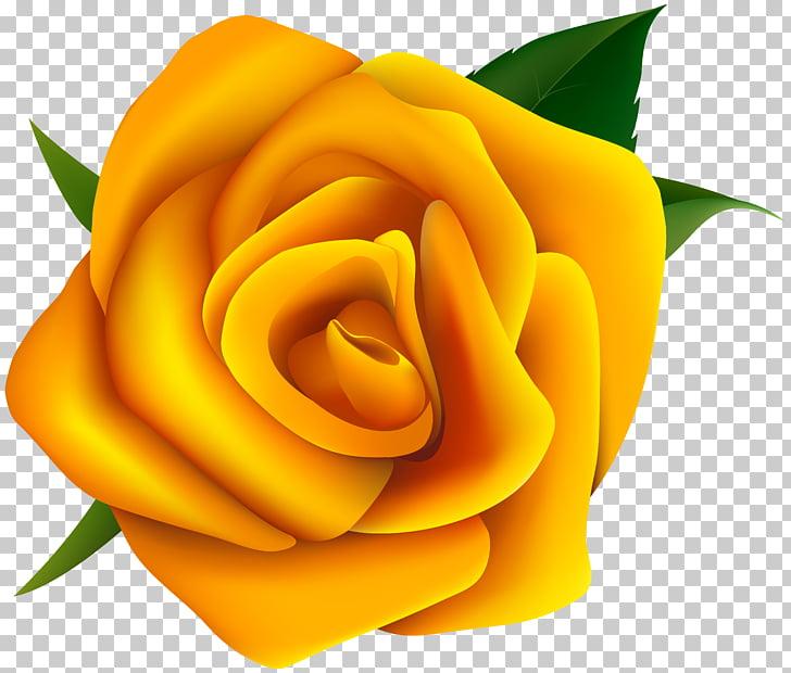 Rose Yellow , Yellow Rose , yellow rose flower illustration.