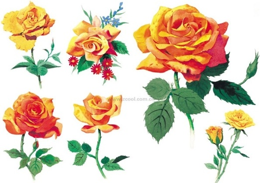 Rose friendship images free stock photos download (2,021.