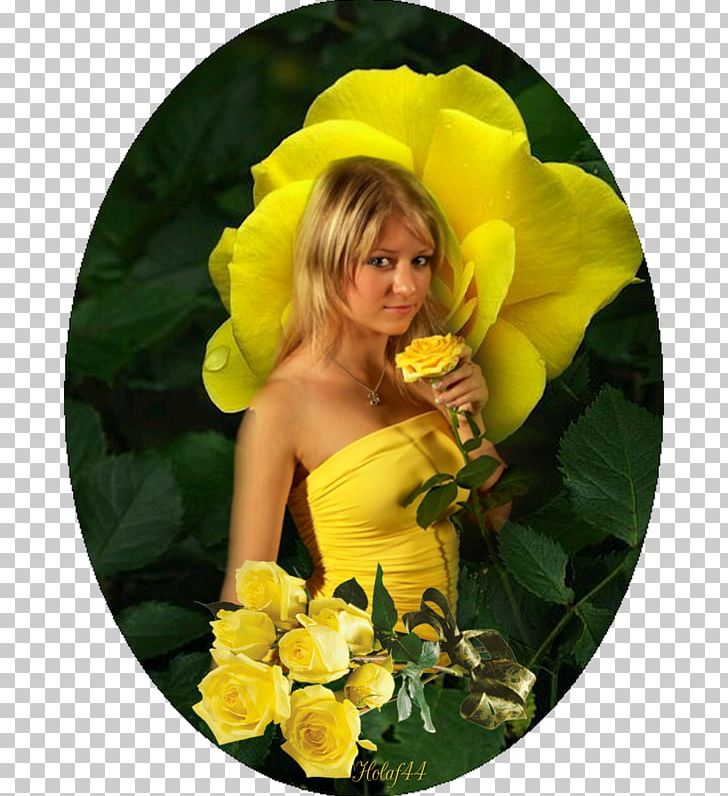 Yellow Garden Roses Friendship Color PNG, Clipart, Color.