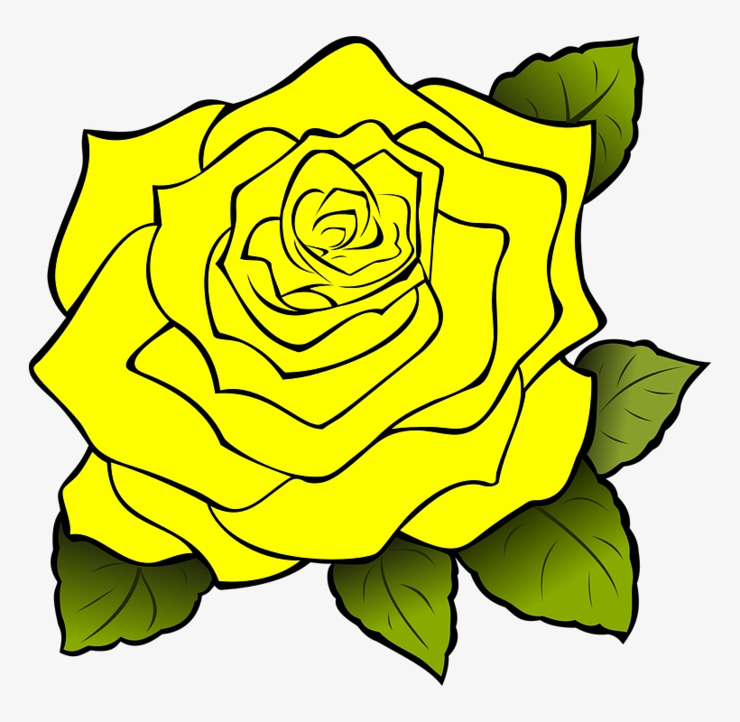 Yellow Rose Flower Free Png Transparent Images Free.