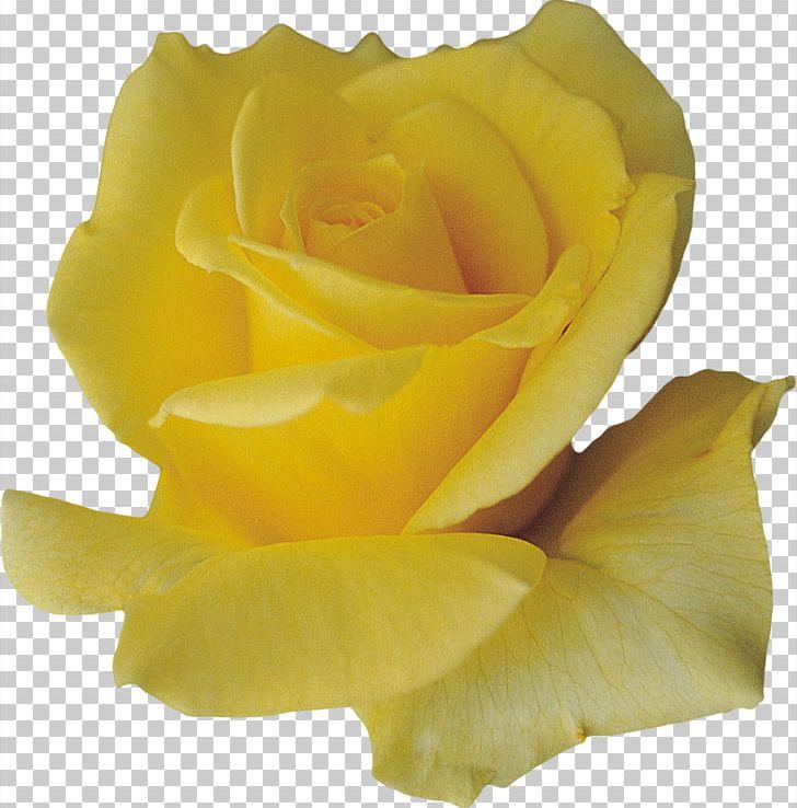Petal Flower Yellow PNG, Clipart, Cut Flowers, Designer.