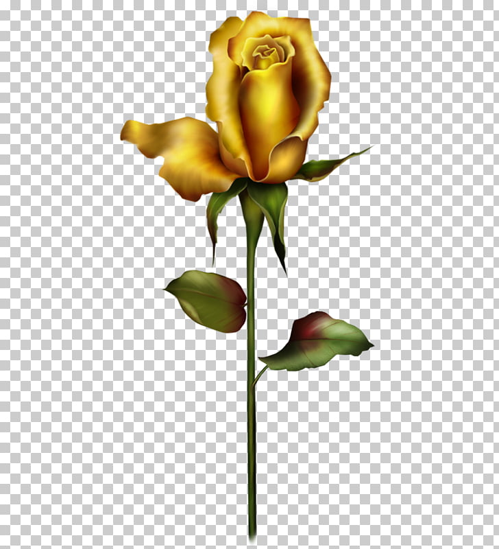 568 Golden Rose PNG cliparts for free download.