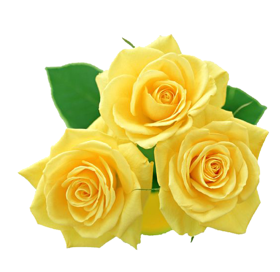 Download Yellow Rose HQ PNG Image.