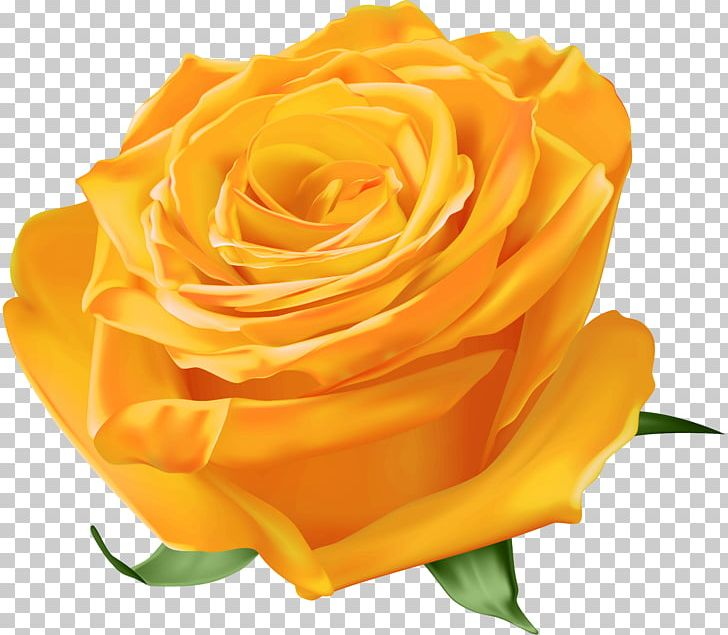 Garden Roses Yellow Blue Rose PNG, Clipart, Blue, Blue Rose, Cut.
