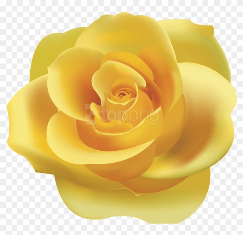 Download Yellow Rose Png Png Images Background.