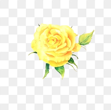 Yellow Rose PNG Images.