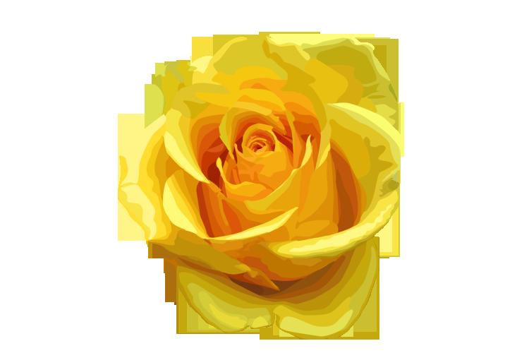Download Yellow Rose PNG Transparent Image 490.